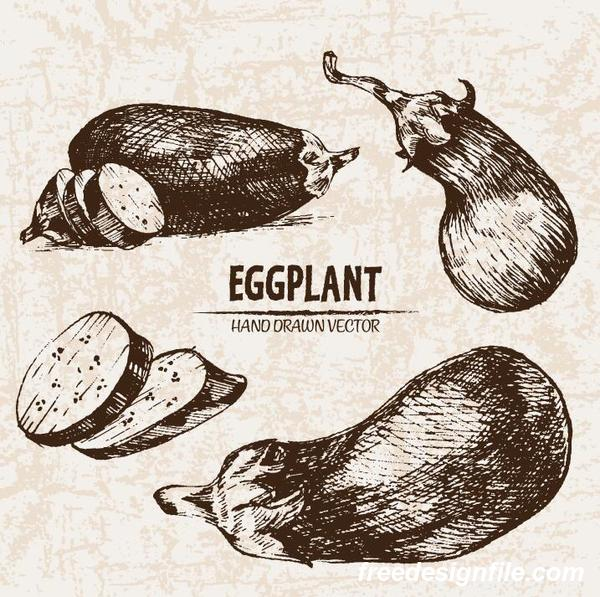 eggplant hand drawing retor vector