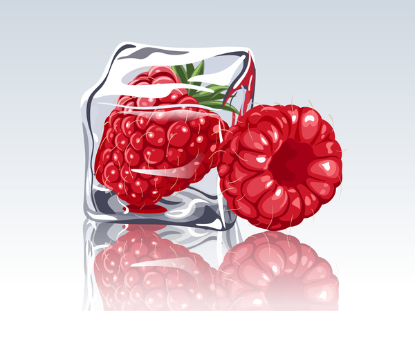 ice cubes and raspberry design vector