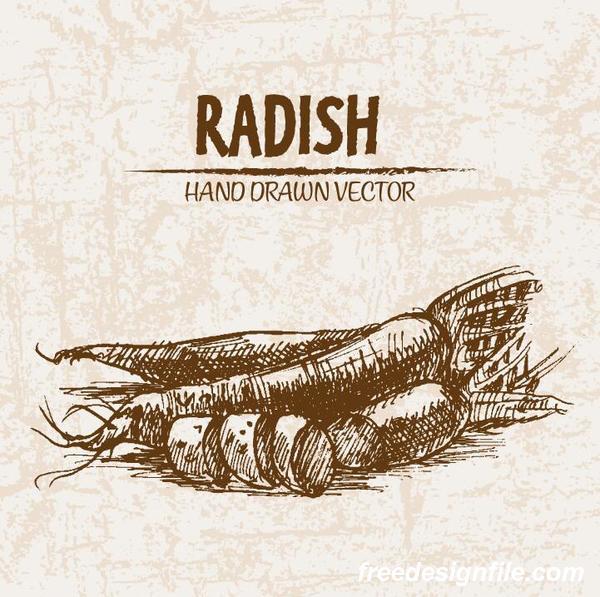 radish hand drawing retor vector 02