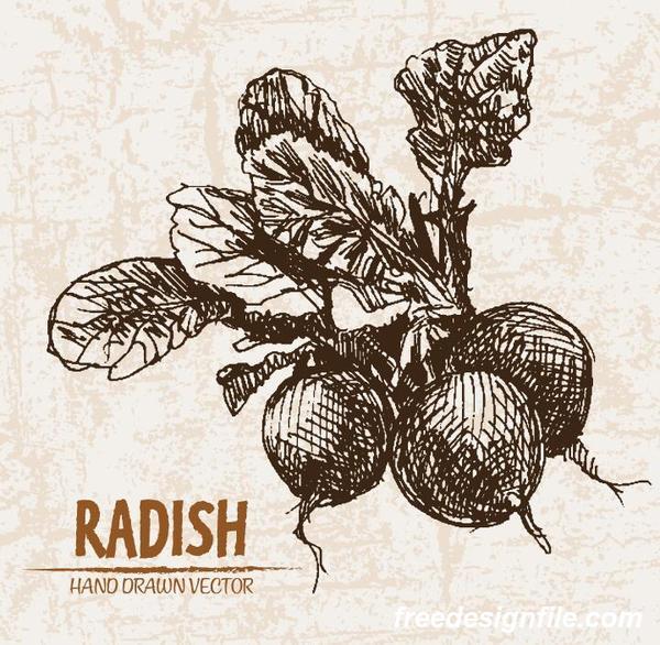 radish hand drawing retor vector 03