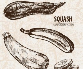 squash hand drawing retor vector 01