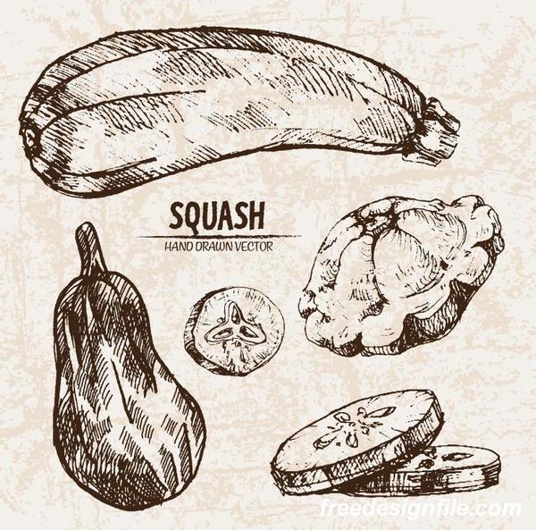 squash hand drawing retor vector 02
