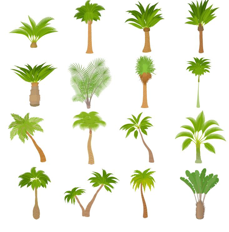 tropical tree illustration vector 02