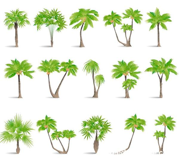 tropical tree illustration vector 03