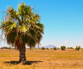A palm tree Stock Photo