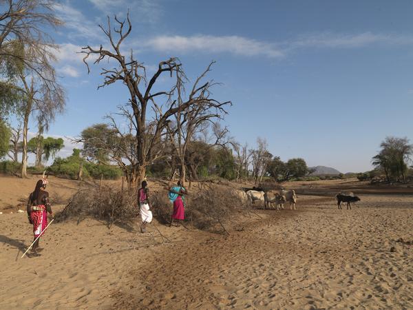 Africa grazing Stock Photo