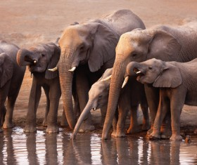 An elephant drinking water on the river HD picture