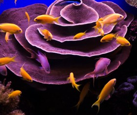 Beautiful coral reefs and flocks of fish Stock Photo