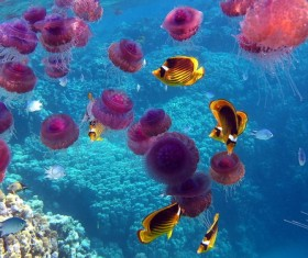 Beautiful purple jellyfish Stock Photo