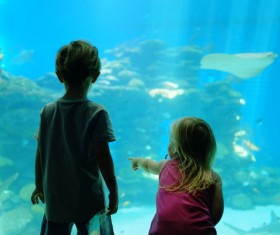 Children aquarium Stock Photo
