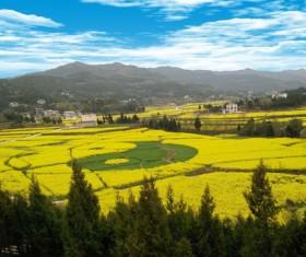 Creative Taiji farmland HD picture