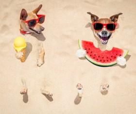 Cute dog on the beach Stock Photo