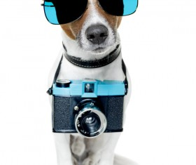 Dog with sunglasses hanging from a camera Stock Photo