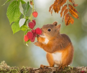 Eat squirrels of food Stock Photo