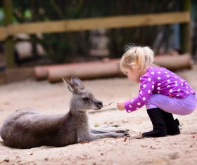 Feed the little kangaroo girl HD picture
