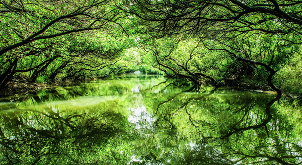 Forest trees and lakes Stock Photo
