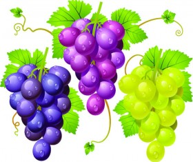 Fresh grapes vector illustration design 01