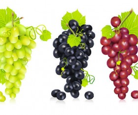 Fresh grapes vector illustration design 02