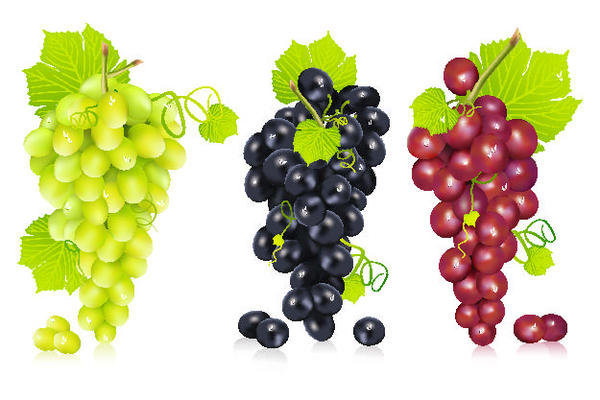 Fresh grapes vector illustration design 02