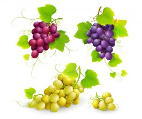 Fresh grapes vector illustration design 03