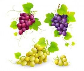 Fresh grapes vector illustration design 03
