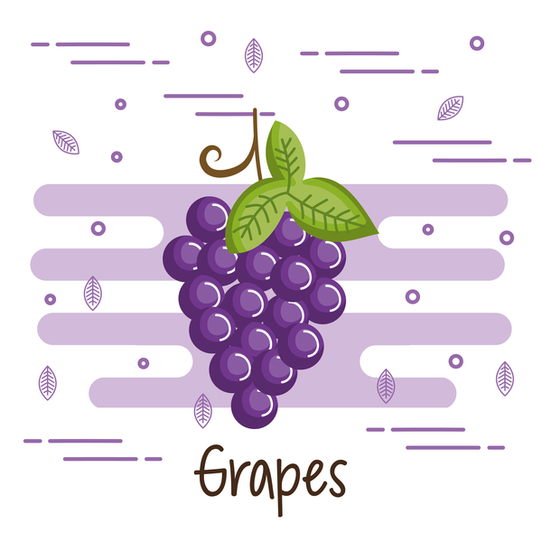 Grapes healthy food vector