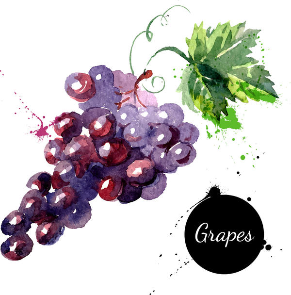 Grunge watercolor grapes vector