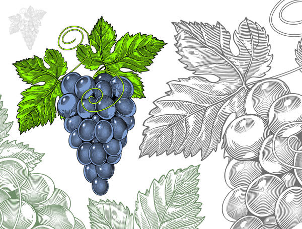 Hand drawn grapes with seamless pattern vector