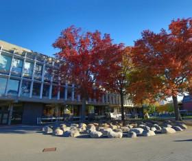 Harvard University campus landscape Stock Photo