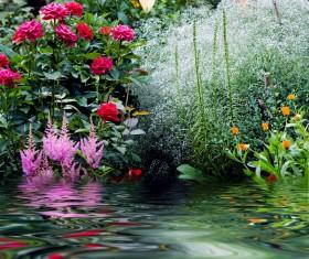 Hetang flowers Stock Photo
