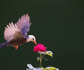 Mercerized starling Stock Photo