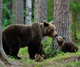 Mother and child black bear Stock Photo