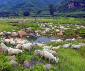 Mountain shepherd Stock Photo