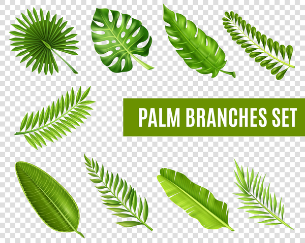 Palm branches leaves vector