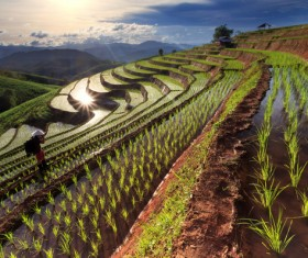 Photographer with terraced fields Stock Photo
