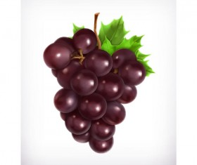 Realistic purple grapes vector material