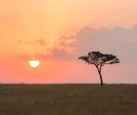Rising from the prairie sun Stock Photo