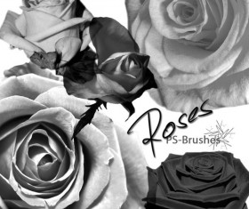 Rose Photoshop Brush