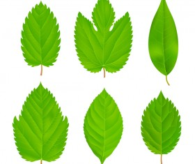Set of green leaves vector 02