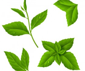 Set of green leaves vector 03