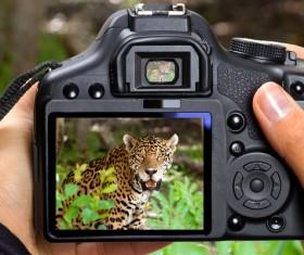 Shoot leopard Stock Photo