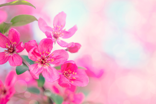 Spring beautiful flowers hd picture 02 free download spring beautiful flowers hd picture 02 voltagebd Images