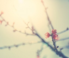 Spring buds HD picture 02