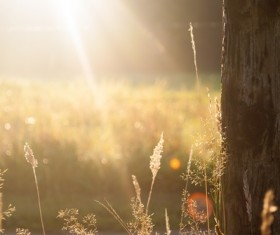 Sun under the grass HD picture