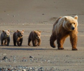 The bear with a cub walking Stock Photo