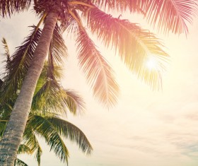 Tropical palm trees Stock Photo 02