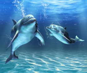 Two dolphins HD picture