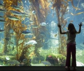 Watch the little fish in the aquarium Stock Photo