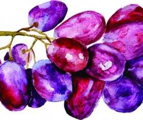 Watercolor grapes vector material