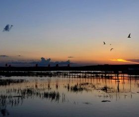 Wetland park sunset beauty HD picture